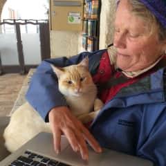 A friendly cat in the Dordogne