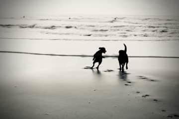 Ella & Lottie at the beach