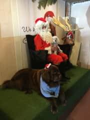 Milo & Mo's photo with Santa.