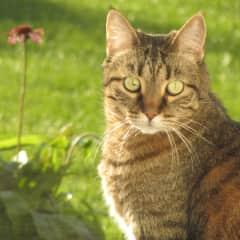 Suzie - our cat - passed 2014