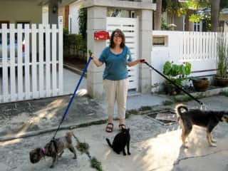 Walking Bear, Coco and Jack the Cat (Thailand)