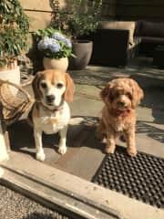 Lola & Taffy