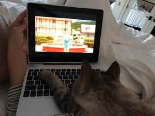 Housesitting - Misty the cat...he wanted to work with me.