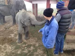 An elephant calf checking Raegan out.