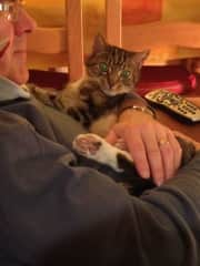 Our diabetic rescue cat Pluto