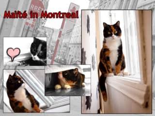 Maite in Montreal