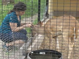 Interacting with a deer in an animal sanctuary in Mckinney, Texas.