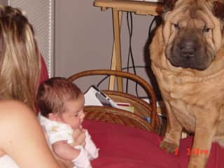 Buster with our new born grand daughter.  Already protective.