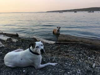 The dogs at the beach
