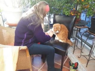 Karen brushing Minka (a Maine Coon), who's loving it.