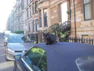 Harry waiting to go for a drive!
