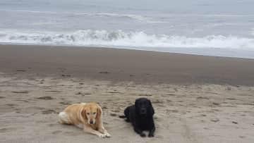Cami and Bailey - furbabies on the beach