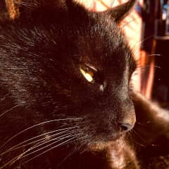Our second cat Afrodita (Gala´s daughter) gets pensive at sunsets.