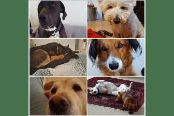 Wonderful furry companions 01