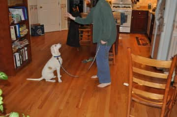 Pam and Ellie (the dog) training