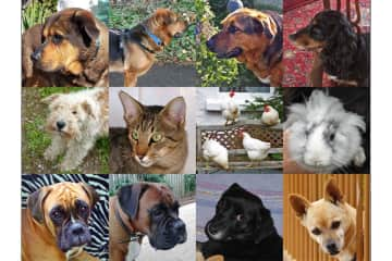 All of our pets - Europe 2015