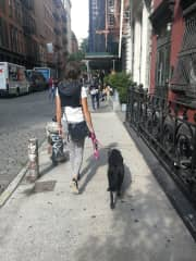 Pet sitting in NYC