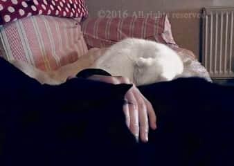 Black & White kitty snuggles