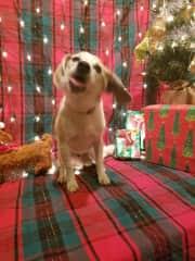 Max at Christmas...age 16