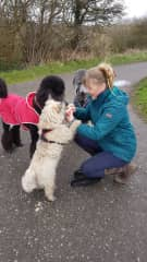 Sally, Alfie the cairn and his friends, Luca & Sonny.