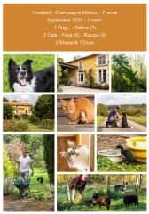 Housesit 1 Dog (Sheepdog) - 2 Cats - 2 Sheep - 1 Duck - Champagne Mouton - France 2020