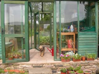 Meg in the potting shed
