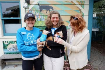 I love to support rescue groups, this was a visit to Peace of Mind in Pacific Grove - little Harp stole my heart!