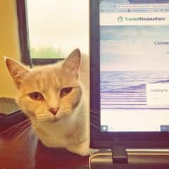 Yellow Cat helping me look for my next #trustedhousesitters assignment, Gracía, Costa Rica