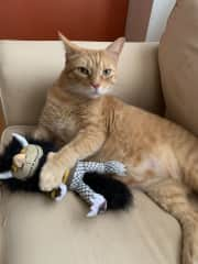 """Dewey, relaxing with his  """"Where the Wild Things Are"""" toy."""