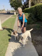 Walking my friends dogs, Maggie and Willow.