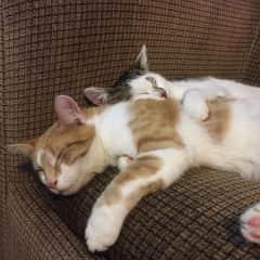 Frednad Theia having a cuddle