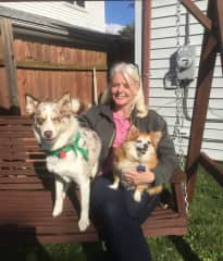 """When Desna, a Pomsky, was in heat, her owners trusted me to keep her safe and unbred! Snickers, a long coated chihuahua,  will """"sing"""" if you play Bye, Bye, Bye by NSYNC. Hilarious."""