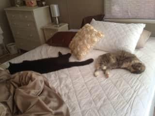 My spoilt kitties.