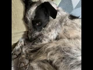 Sadie loves to cuddle
