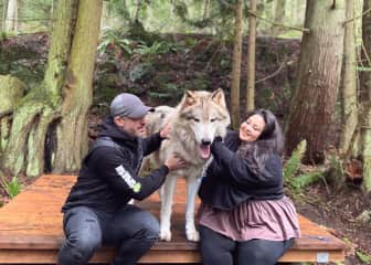 Frolicking with wolves in Washington State