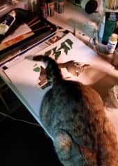Kitty preferring attention to me painting her picture