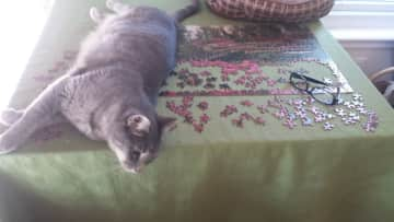 Dusty helping with the puzzle.