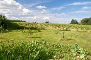 Garden in the vineyards