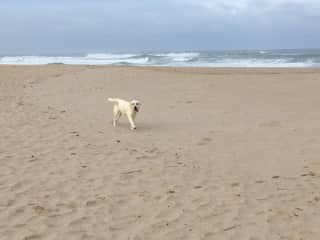 Coco from Obidos; she LOVED the beach!!!  She forgot how old she was and we had to chase her--she was having so much fun!