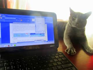 Working with a little companion