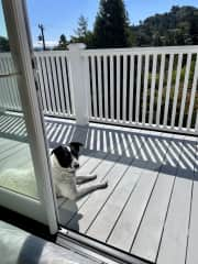 Ozzie loves his balcony overlooking the valley