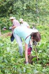 Me planting trees in the Dominican Republic RainFforest last May