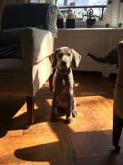 Mavis as a puppy