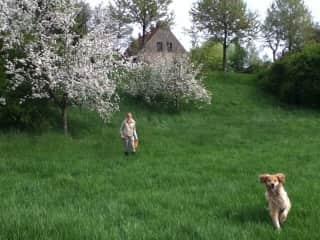 Our regular dogsit at home Sara