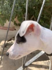 The pup, Nala