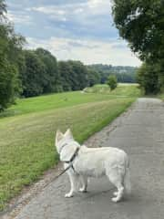 Nala looking at a deer on one of our walks:)