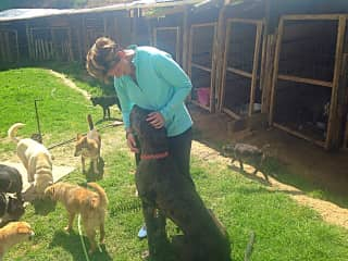Diane volunteering at a local dog shelter that cares for over 80 dogs.  Here she is pictured with Julius, The Great Dane.  Such a BIG dog and such a gentle one too.