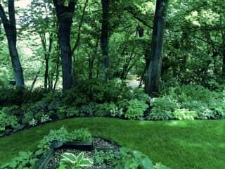 Part of my backyard garden