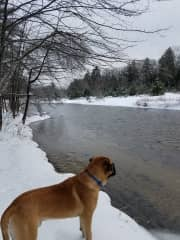 Walking in the National Forest in the White Mountains with Sydney