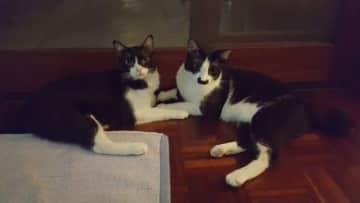 Kasiyah and Kimble